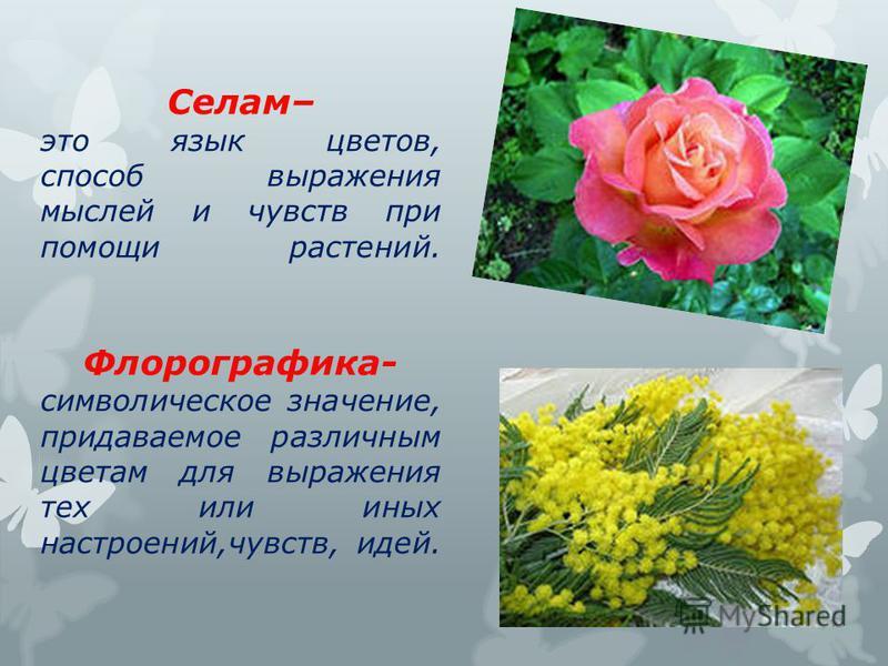 Селам– это язык цветов, способ выражения мыслей и чувств при помощи растений. Флорографика- символическое значение, придаваемое различным цветам для выражения тех или иных настроений,чувств, идей.