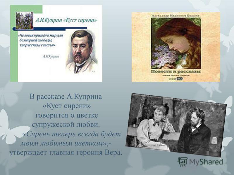 В рассказе А.Куприна «Куст сирени» говорится о цветке супружеской любви. «Сирень теперь всегда будет моим любимым цветком»,- утверждает главная героиня Вера.