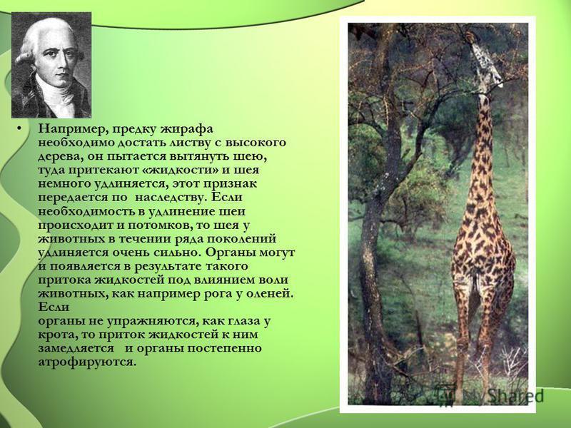 Например, предку жирафа необходимо достать листву с высокого дерева, он пытается вытянуть шею, туда притекают «жидкости» и шея немного удлиняется, этот признак передается по наследству. Если необходимость в удлинение шеи происходит и потомков, то шея