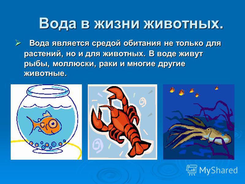 Вода в жизни животных. Вода является средой обитания не только для растений, но и для животных. В воде живут рыбы, моллюски, раки и многие другие животные. Вода является средой обитания не только для растений, но и для животных. В воде живут рыбы, мо