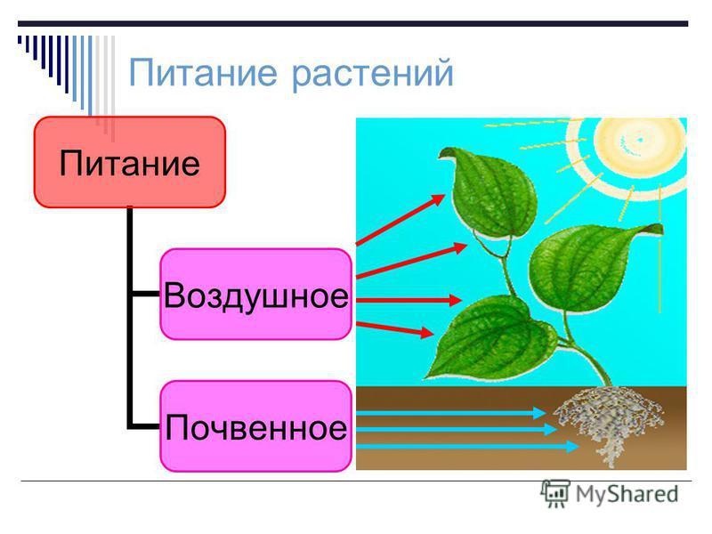 Питание растений Питание Воздушно е Почвенное