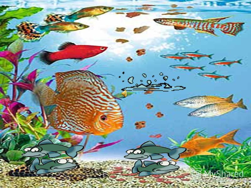 Рыба- клоун Рыба- клоун