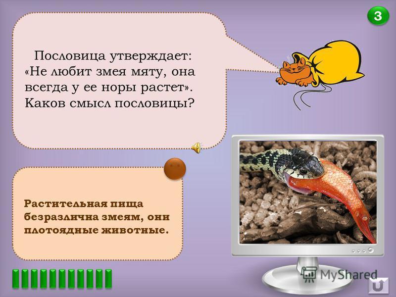2 2 Почему взгляд змей немигающий, гипнотизирующий? Глаза змеи всегда открыты, так как веки их срослись, и они всегда прозрачны, как стекло.