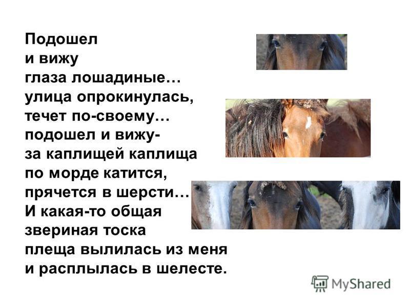 Подошел и вижу глаза лошадиные… улица опрокинулась, течет по-своему… подошел и вижу- за каплищей каплища по морде катится, прячется в шерсти… И какая-то общая звериная тоска плеща вылилась из меня и расплылась в шелесте.
