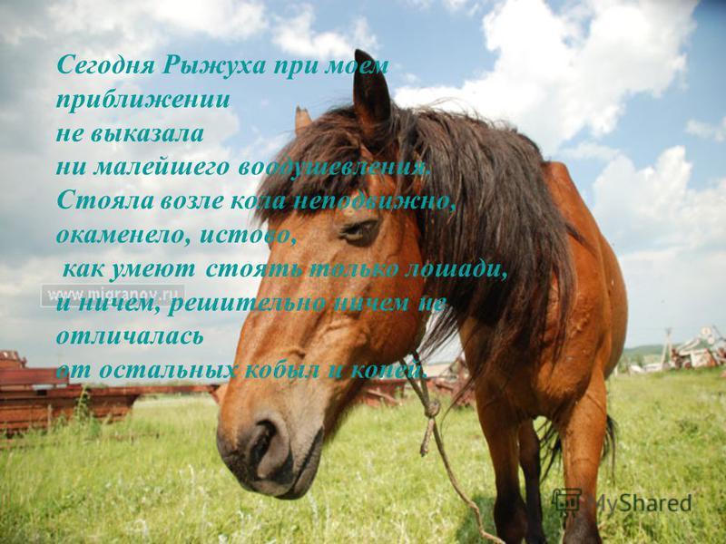 Сегодня Рыжуха при моем приближении не выказала ни малейшего воодушевления. Стояла возле кола неподвижно, окаменело, истово, как умеют стоять только лошади, и ничем, решительно ничем не отличалась от остальных кобыл и коней.