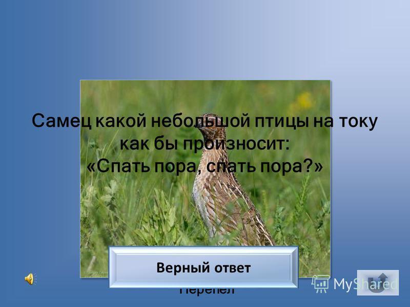 Иволга Какая птица кричит кошкой? Верный ответ