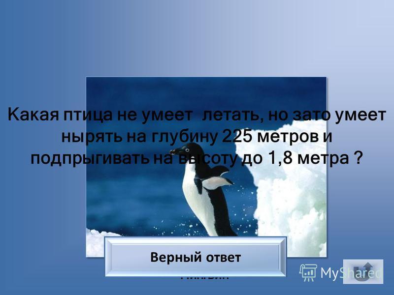 Перепел Самец какой небольшой птицы на току как бы произносит: «Спать пора, спать пора?» Верный ответ