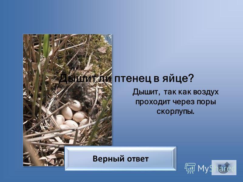 У клестов У каких птиц самцы красные, а самки зеленые? Верный ответ