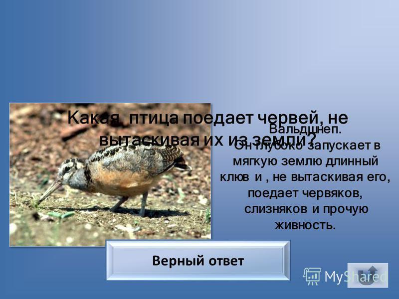 У какой птицы хвост имеет форму музыкального инструмента? У птицы лирохвост, получивший своё название за форму хвоста, похожего на лиру. Верный ответ