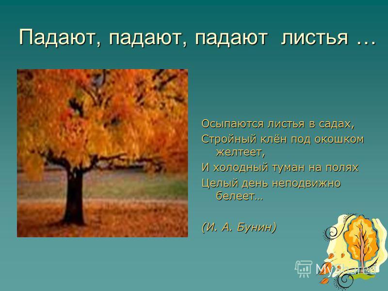 Падают, падают, падают листья … Осыпаются листья в садах, Стройный клён под окошком желтеет, И холодный туман на полях Целый день неподвижно белеет… (И. А. Бунин)