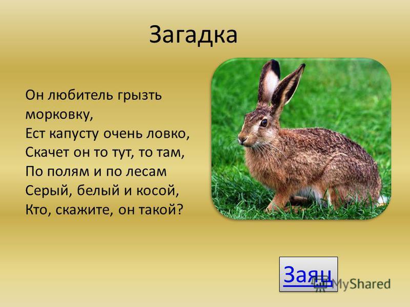 Загадка Он любитель грызть морковку, Ест капусту очень ловко, Скачет он то тут, то там, По полям и по лесам Серый, белый и косой, Кто, скажите, он такой? Заяц