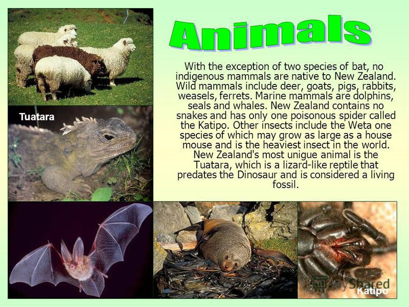 With the exception of two species of bat, no indigenous mammals are native to New Zealand. Wild mammals include deer, goats, pigs, rabbits, weasels, ferrets. Marine mammals are dolphins, seals and whales. New Zealand contains no snakes and has only o