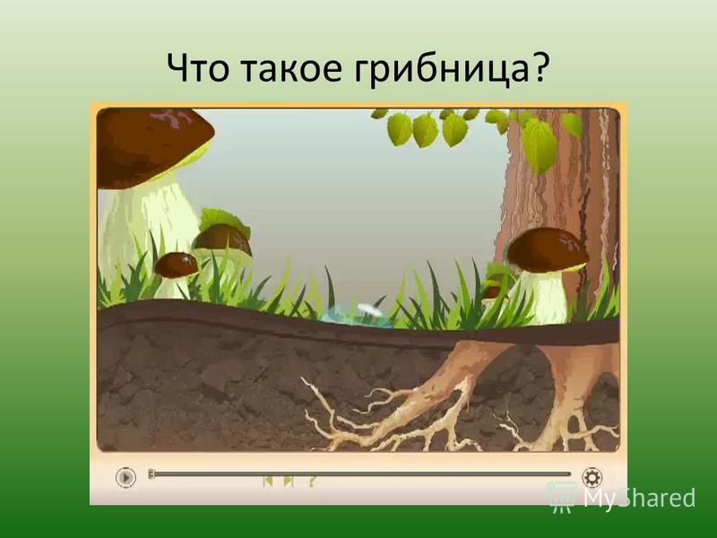 Что такое грибница?