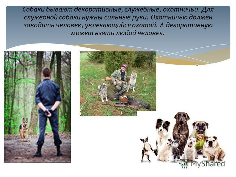 Собаки бывают декоративные, служебные, охотничьи. Для служебной собаки нужны сильные руки. Охотничью должен заводить человек, увлекающийся охотой. А декоративную может взять любой человек.