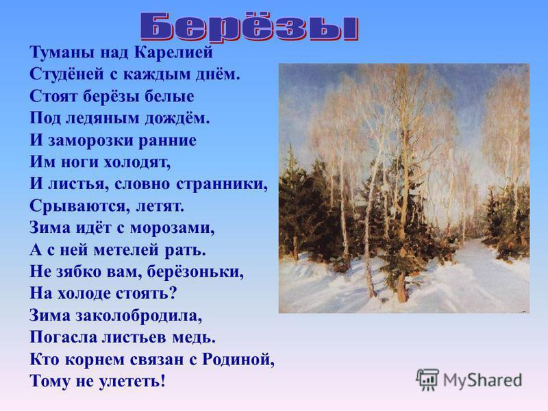 Туманы над Карелией Студёней с каждым днём. Стоят берёзы белые Под ледяным дождём. И заморозки ранние Им ноги холодят, И листья, словно странники, Срываются, летят. Зима идёт с морозами, А с ней метелей рать. Не зябко вам, берёзоньки, На холоде стоят