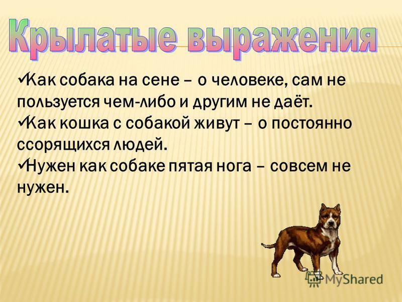 Как собака на сене – о человеке, сам не пользуется чем-либо и другим не даёт. Как кошка с собакой живут – о постоянно ссорящихся людей. Нужен как собаке пятая нога – совсем не нужен.