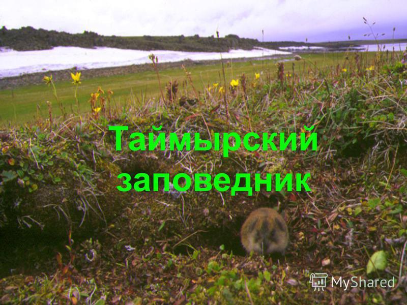 Куприт Куприт Алмаз Алмаз Халькопирит (медный колчедан) Халькопирит (медный колчедан) Красный корунд Красный корунд