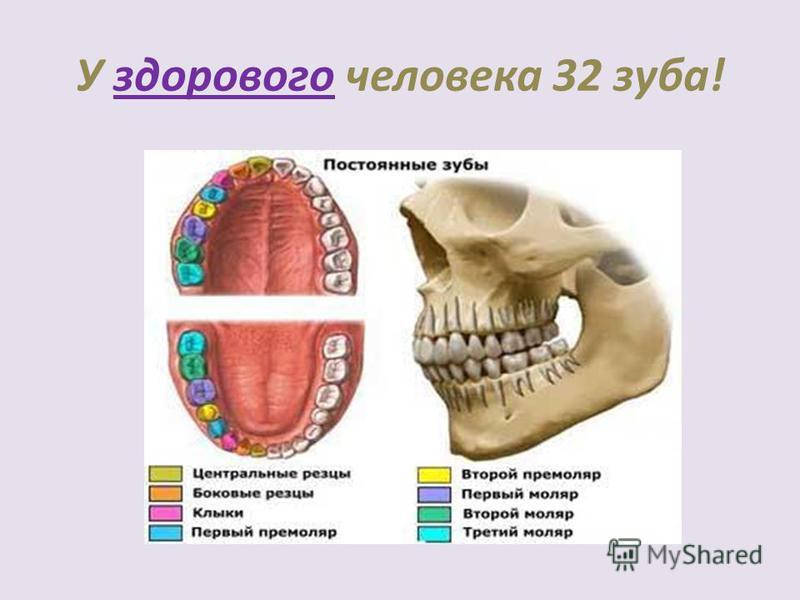 У здорового человека 32 зуба!