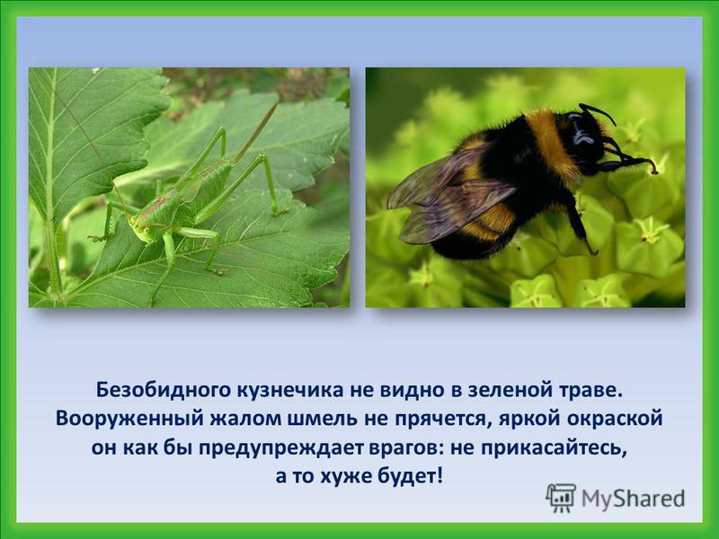 Как вы думаете, почему кузнечик зелёный, а шмель – пёстрый?