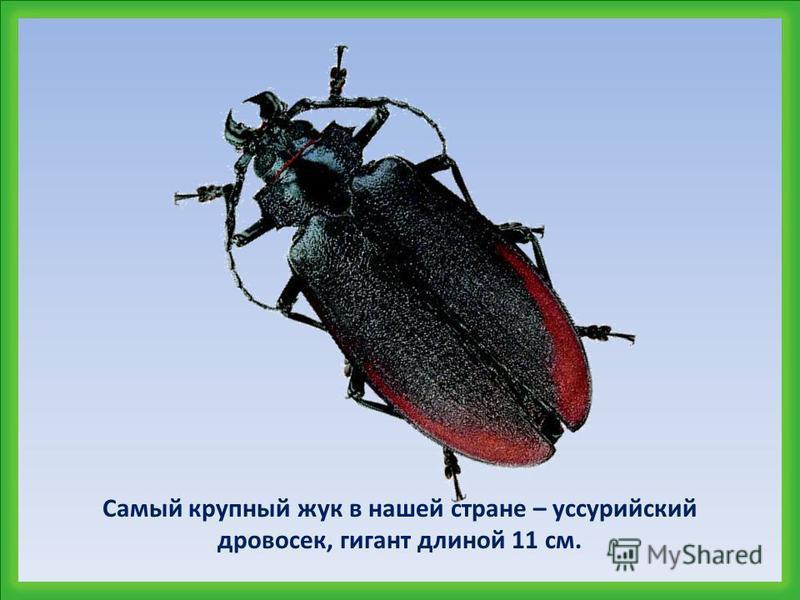 Каких размеров бывают насекомые?