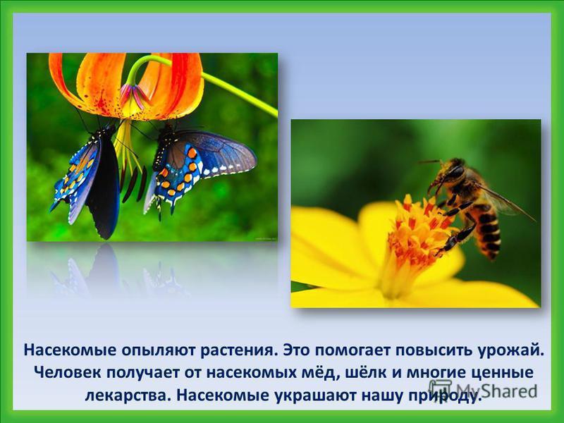 Какую пользу приносят насекомые?