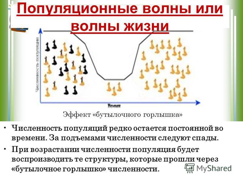 Эффект «бутылочного горлышка» Численность популяций редко остается постоянной во времени. За подъемами численности следуют спады. При возрастании численности популяция будет воспроизводить те структуры, которые прошли через «бутылочное горлышко» числ