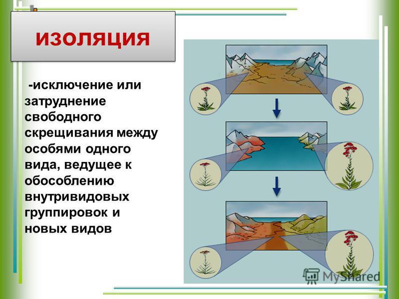 изоляция -исключение или затруднение свободного скрещивания между особями одного вида, ведущее к обособлению внутривидовых группировок и новых видов