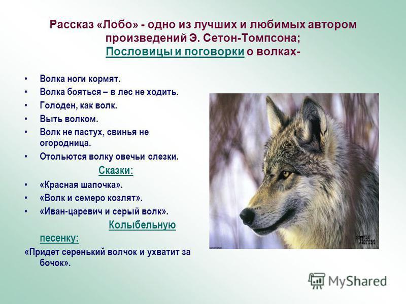 Рассказ «Лобо» - одно из лучших и любимых автором произведений Э. Сетон-Томпсона; Пословицы и поговорки о волках- Волка ноги кормят. Волка бояться – в лес не ходить. Голоден, как волк. Выть волком. Волк не пастух, свинья не огородница. Отольются волк