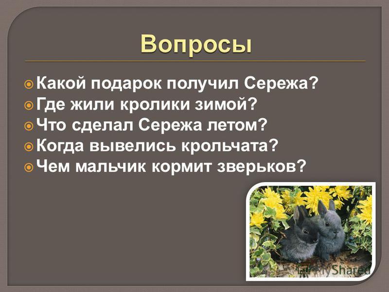 Какой подарок получил Сережа? Где жили кролики зимой? Что сделал Сережа летом? Когда вывелись крольчата? Чем мальчик кормит зверьков?