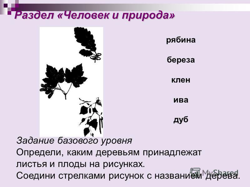 Раздел «Человек и природа» Раздел «Человек и природа» Задание базового уровня Определи, каким деревьям принадлежат листья и плоды на рисунках. Соедини стрелками рисунок с названием дерева. рябина береза клен ива дуб