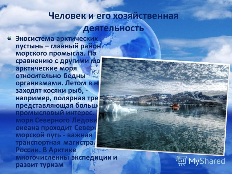 Экосистема арктических пустынь – главный район морского промысла. По сравнению с другими морями арктические моря относительно бедны организмами. Летом в них заходят косяки рыб, - например, полярная треска, представляющая большой промысловый интерес.