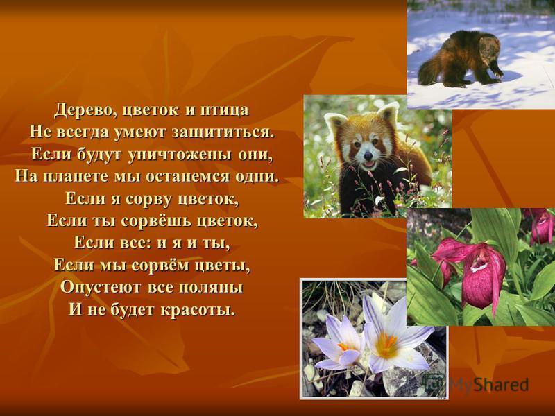 Дерево, цветок и птица Не всегда умеют защититься. Если будут уничтожены они, На планете мы останемся одни. Если я сорву цветок, Если ты сорвёшь цветок, Если все: и я и ты, Если мы сорвём цветы, Опустеют все поляны И не будет красоты.
