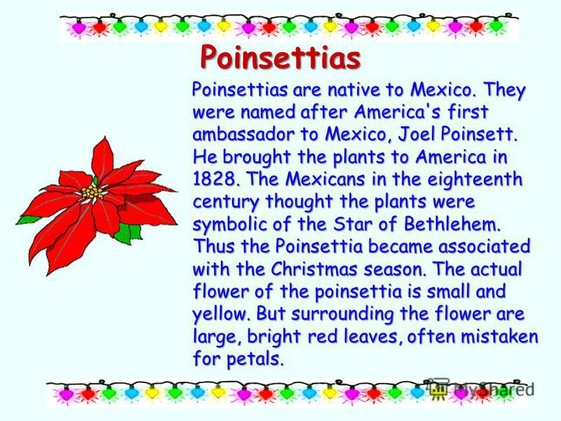 Poinsettias Poinsettias are native to Mexico. They were named after America's first ambassador to Mexico, Joel Poinsett. He brought the plants to America in 1828. The Mexicans in the eighteenth century thought the plants were symbolic of the Star of