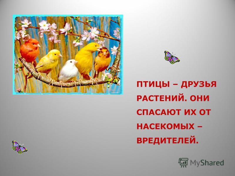 ПРАВИЛА ПОВЕДЕНИЯ В ЛЕСУ. Оберегайте птиц, не заглядывайте в их гнёзда, не трогайте яички. Весной и в начале лета не берите в лес собаку, не шумите в лесу – ведь там подрастают птенцы. Не подходите близко к гнёздам птиц. По вашим следам хищники могут