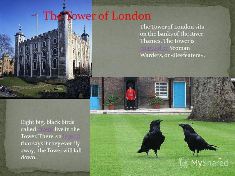 The Tower of London The Tower of London sits on the banks of the River Thames. The Tower is guarded by Yeoman Warders, or «Beefeaters». guarded by Eight big, black birds called ravens live in the Tower. There, s a legend that says if they ever fly aw