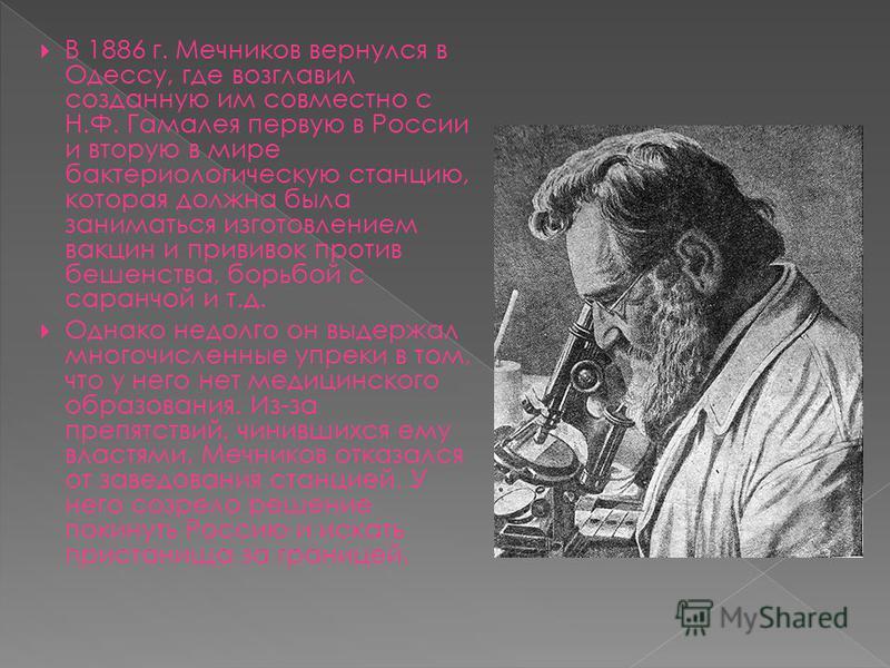 В 1886 г. Мечников вернулся в Одессу, где возглавил созданную им совместно с Н.Ф. Гамалея первую в России и вторую в мире бактериологическую станцию, которая должна была заниматься изготовлением вакцин и прививок против бешенства, борьбой с саранчой