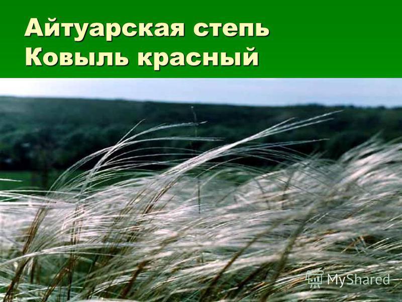 Айтуарская степь Ковыль красный