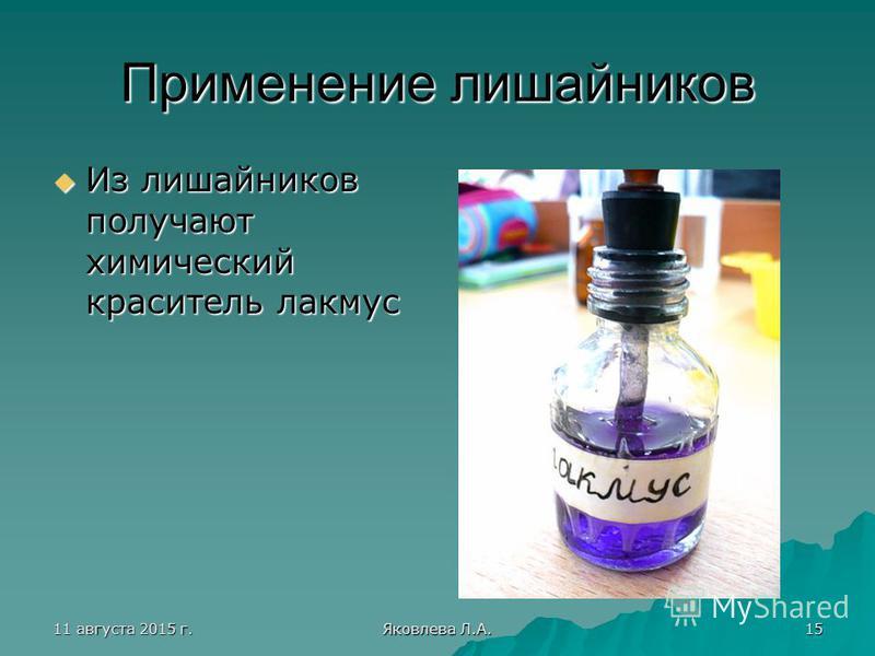 11 августа 2015 г.11 августа 2015 г.11 августа 2015 г.11 августа 2015 г. Яковлева Л.А. 15 Применение лишайников Из лишайников получают химический краситель лакмус Из лишайников получают химический краситель лакмус