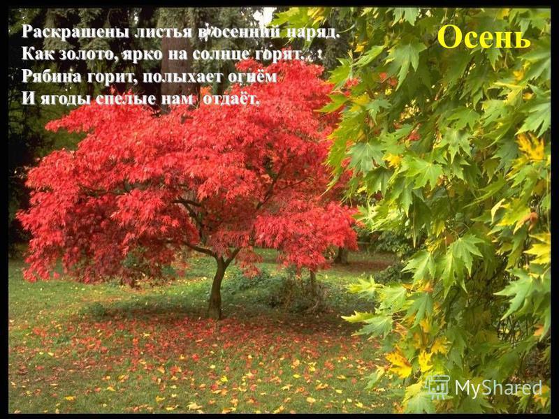 Осень Раскрашены листья в осенний наряд. Как золото, ярко на солнце горят. Рябина горит, полыхает огнём И ягоды спелые нам отдаёт.