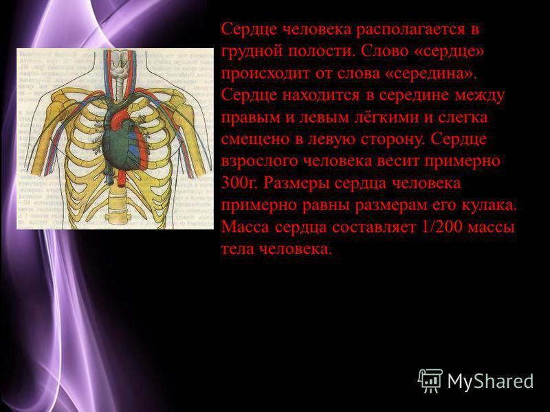 Page 4 Сердце человека располагается в грудной полости. Слово «сердце» происходит от слова «середина». Сердце находится в середине между правым и левым лёгкими и слегка смещено в левую сторону. Сердце взрослого человека весит примерно 300 г. Размеры