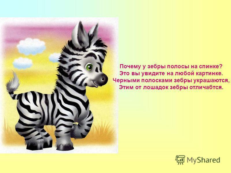 Почему у зебры полосы на спинке? Это вы увидите на любой картинке. Черными полосками зебры украшаются, Этим от лошадок зебры отличаются.