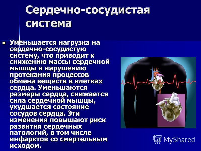 Сердечно-сосудистая система Уменьшается нагрузка на сердечно-сосудистую систему, что приводит к снижению массы сердечной мышцы и нарушению протекания процессов обмена веществ в клетках сердца. Уменьшаются размеры сердца, снижается сила сердечной мышц