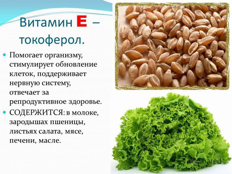 Витамин E – токоферол. Помогает организму, стимулирует обновление клеток, поддерживает нервную систему, отвечает за репродуктивное здоровье. СОДЕРЖИТСЯ: в молоке, зародышах пшеницы, листьях салата, мясе, печени, масле.