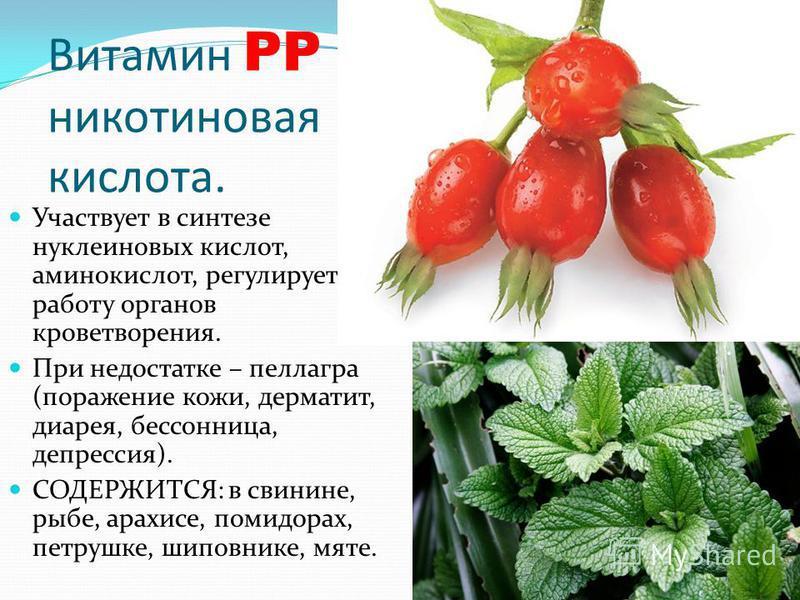 Витамин PP – никотиновая кислота. Участвует в синтезе нуклеиновых кислот, аминокислот, регулирует работу органов кроветворения. При недостатке – пеллагра (поражение кожи, дерматит, диарея, бессонница, депрессия). СОДЕРЖИТСЯ: в свинине, рыбе, арахисе,