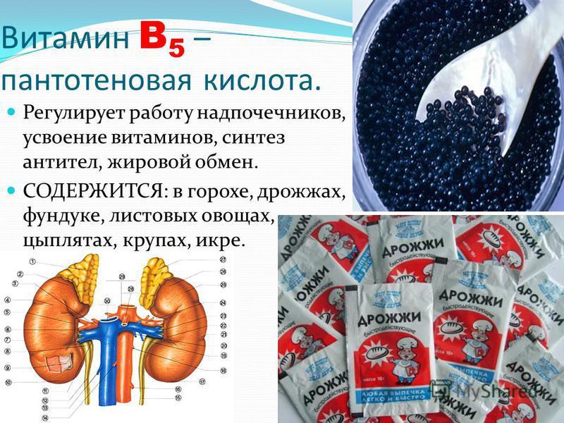 Витамин B 5 – пантотеновая кислота. Регулирует работу надпочечников, усвоение витаминов, синтез антител, жировой обмен. СОДЕРЖИТСЯ: в горохе, дрожжах, фундуке, листовых овощах, цыплятах, крупах, икре.