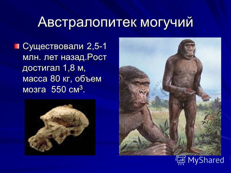 Австралопитек могучий Существовали 2,5-1 млн. лет назад.Рост достигал 1,8 м, масса 80 кг, объем мозга 550 см 3.