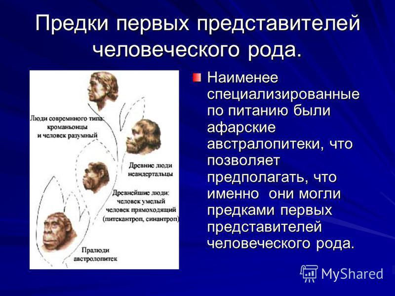 Предки первых представителей человеческого рода. Наименее специализированные по питанию были аварские австралопитеки, что позволяет предполагать, что именно они могли предками первых представителей человеческого рода.