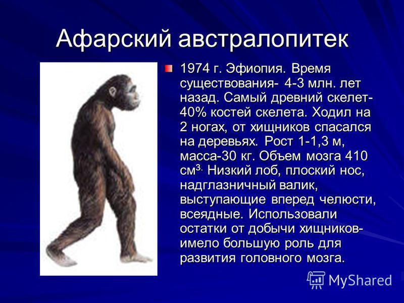 Афарский австралопитек 1974 г. Эфиопия. Время существования- 4-3 млн. лет назад. Самый древний скелет- 40% костей скелета. Ходил на 2 ногах, от хищников спасался на деревьях. Рост 1-1,3 м, масса-30 кг. Объем мозга 410 см 3. Низкий лоб, плоский нос, н