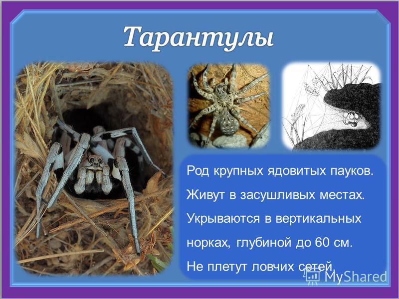 Род крупных ядовитых пауков. Живут в засушливых местах. Укрываются в вертикальных норках, глубиной до 60 см. Не плетут ловчих сетей.
