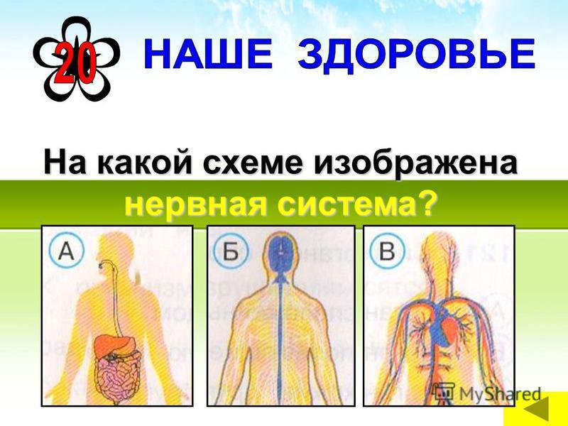 На какой схеме изображена нервная система?